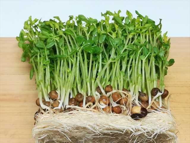 60556047f86e6b87208b5eb4fd8cb053 - 新鮮長持ち!野菜の保存方法を写真付きで紹介