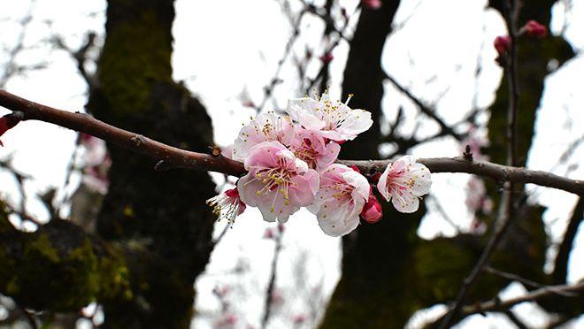 DSC 2771 2 - 【スポット】福岡で行ったところ|ちょろ旅#13