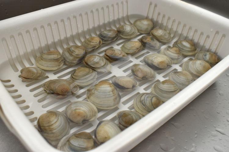 DSC 5417 - ホンビノス貝の調理|砂抜き・塩抜き方法を分かりやすく解説
