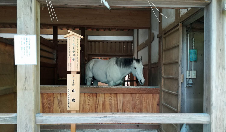 sinme - 香川県3泊4日の旅の記録|ルーレットの旅#12