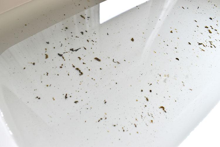 sunadasi  - ホンビノス貝の調理|砂抜き・塩抜き方法を分かりやすく解説