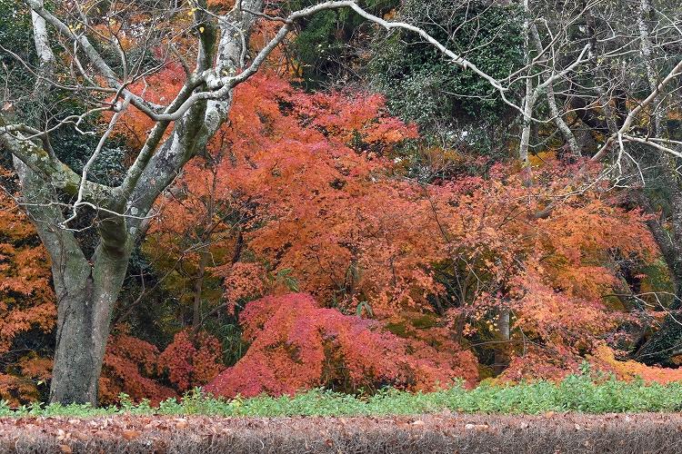 DSC 0482 - 佐倉散歩。ごほうびプリンから武家屋敷まで、いろいろ味わえる半日コース。