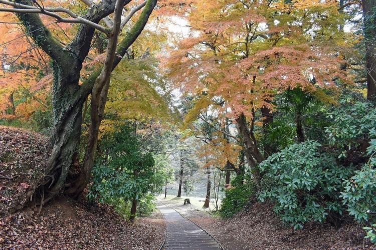 DSC 0493 - 佐倉散歩。ごほうびプリンから武家屋敷まで、いろいろ味わえる半日コース。