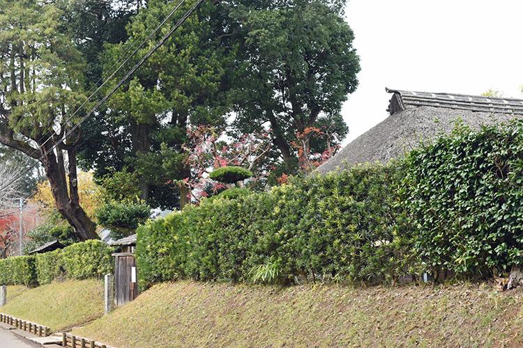 DSC 0552 - 佐倉散歩。ごほうびプリンから武家屋敷まで、いろいろ味わえる半日コース。