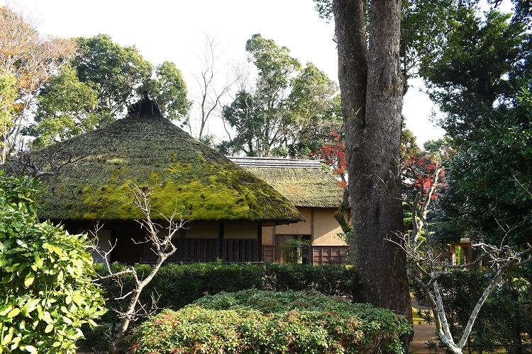 DSC 0599 - 佐倉散歩。ごほうびプリンから武家屋敷まで、いろいろ味わえる半日コース。