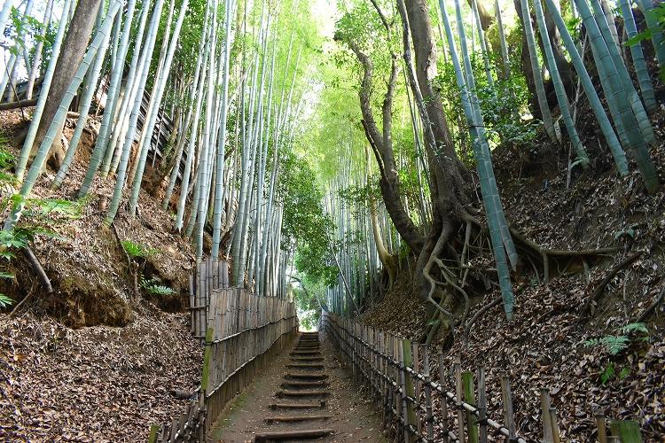 DSC 0619 - 佐倉散歩。ごほうびプリンから武家屋敷まで、いろいろ味わえる半日コース。
