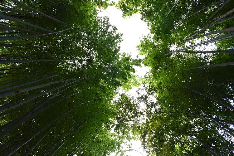 DSC 0625 - 佐倉散歩。ごほうびプリンから武家屋敷まで、いろいろ味わえる半日コース。