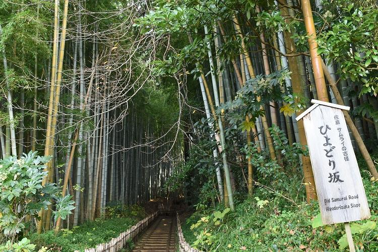 DSC 0627 - 佐倉散歩。ごほうびプリンから武家屋敷まで、いろいろ味わえる半日コース。