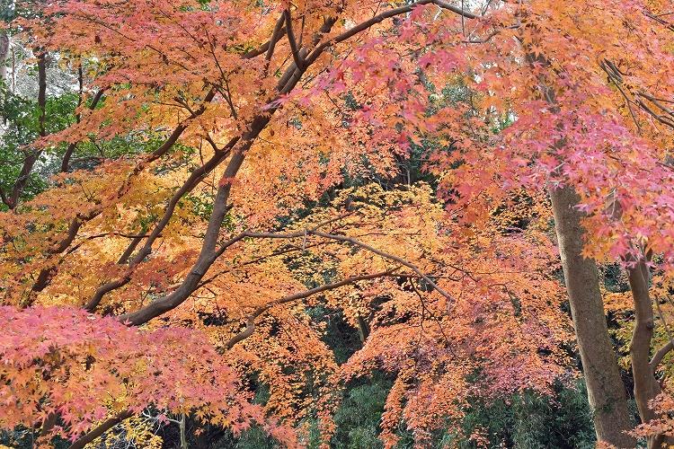 DSC 0633 - 佐倉散歩。ごほうびプリンから武家屋敷まで、いろいろ味わえる半日コース。