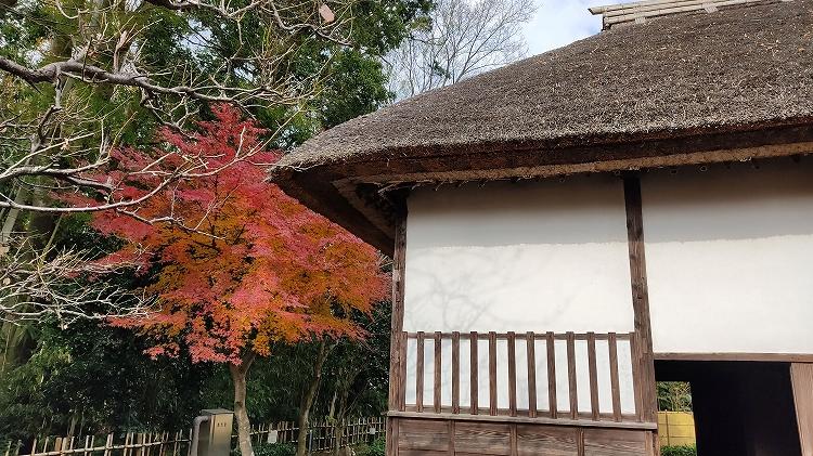 IMG 20201211 122515 - 佐倉散歩。ごほうびプリンから武家屋敷まで、いろいろ味わえる半日コース。