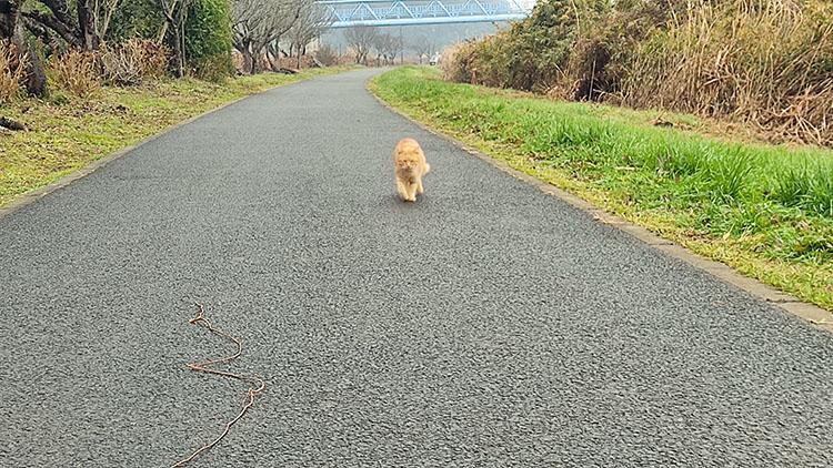 IMG 20201230 122435 - 小晦日。なかよし橋 ~ 佐倉ふるさと広場 まで自転車で走る!