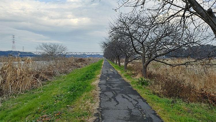 IMG 20201230 1524177 - 小晦日。なかよし橋 ~ 佐倉ふるさと広場 まで自転車で走る!