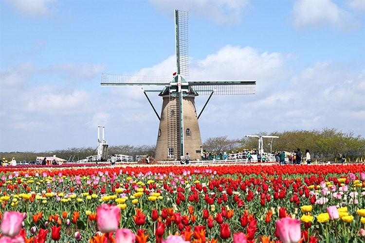 sakura tulip - 佐倉散歩。ごほうびプリンから武家屋敷まで、いろいろ味わえる半日コース。
