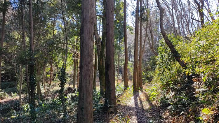 IMG 20210130 114902 - 秘密基地?佐倉市【野鳥の森】を散歩したら人にも鳥にも出会わなかった。