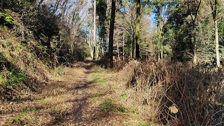 IMG 20210130 115040 - 秘密基地?佐倉市【野鳥の森】を散歩したら人にも鳥にも出会わなかった。