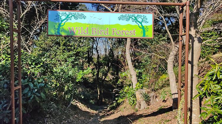 IMG 20210130 115322 - 秘密基地?佐倉市【野鳥の森】を散歩したら人にも鳥にも出会わなかった。