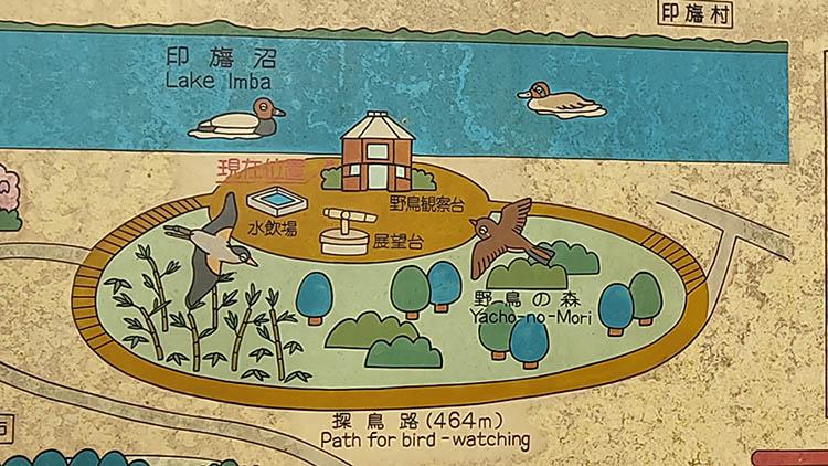 IMG 20210130 120109 1 - 秘密基地?佐倉市【野鳥の森】を散歩したら人にも鳥にも出会わなかった。