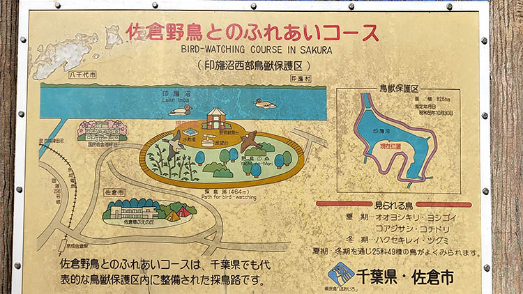 IMG 20210130 120109 - 秘密基地?佐倉市【野鳥の森】を散歩したら人にも鳥にも出会わなかった。