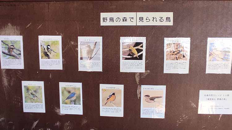 IMG 20210130 120432 - 秘密基地?佐倉市【野鳥の森】を散歩したら人にも鳥にも出会わなかった。