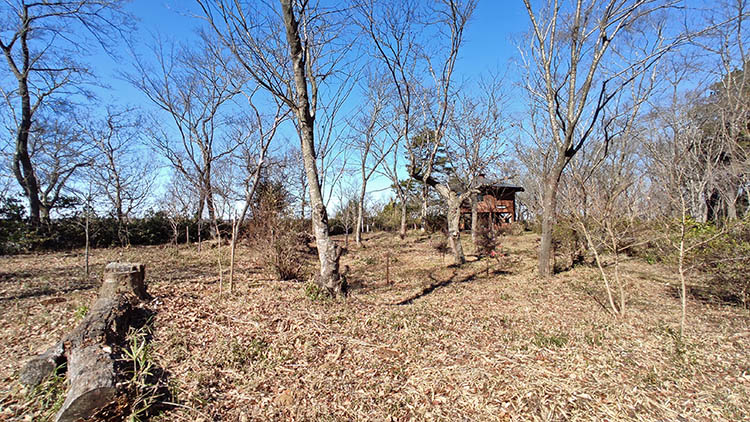 IMG 20210130 122229 - 秘密基地?佐倉市【野鳥の森】を散歩したら人にも鳥にも出会わなかった。