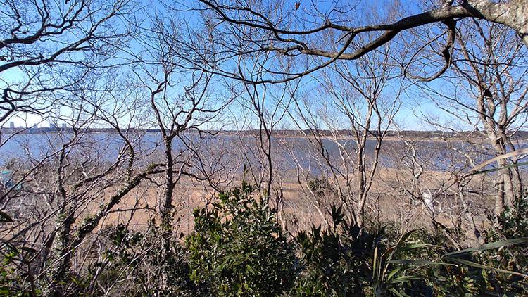 IMG 20210130 122338 - 秘密基地?佐倉市【野鳥の森】を散歩したら人にも鳥にも出会わなかった。