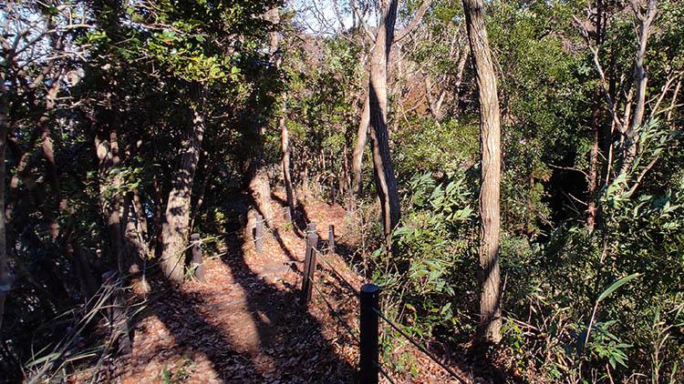 IMG 20210130 1227299 - 秘密基地?佐倉市【野鳥の森】を散歩したら人にも鳥にも出会わなかった。