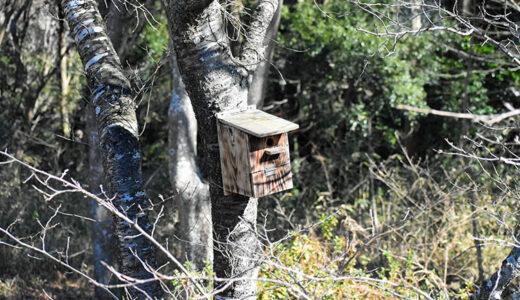 秘密基地?佐倉市【野鳥の森】を散歩したら人にも鳥にも出会わなかった。