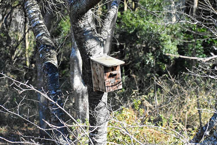 c98ee8578659017897181938697682d6 - 秘密基地?佐倉市【野鳥の森】を散歩したら人にも鳥にも出会わなかった。