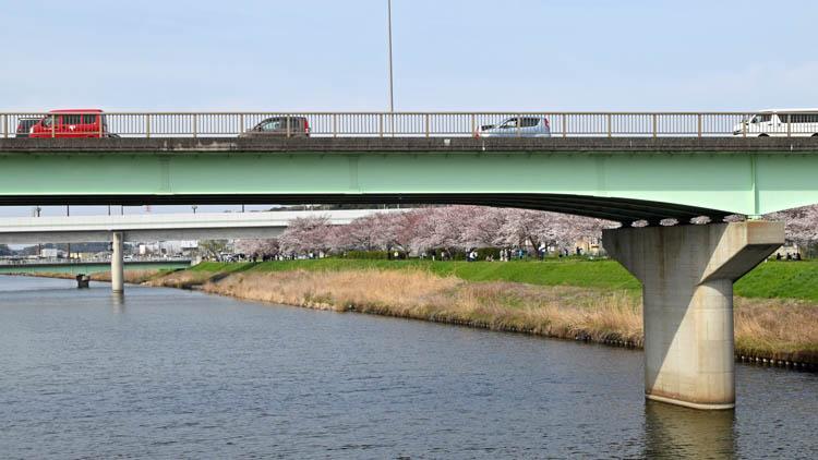 DSC 0019 - 八千代市「新川千本桜」のソメイヨシノが満開!