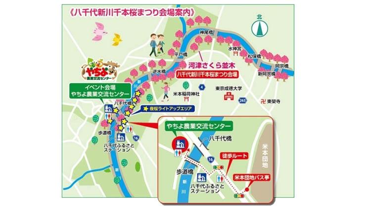kaijyou annai - 八千代市「新川千本桜」のソメイヨシノが満開!