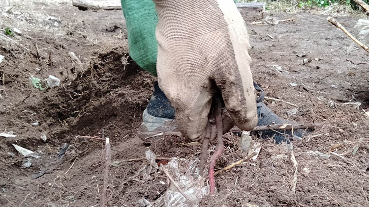 IMG20210606144504 - 整地の工程は3つだけ。「刈る」「除去」「土ならし」を 初心者が実践