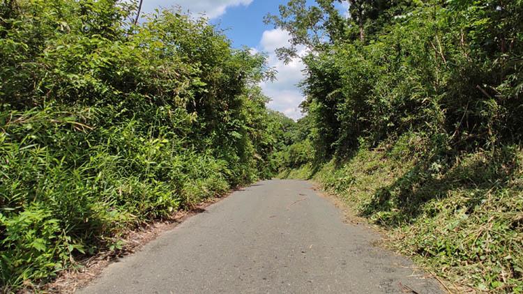 IMG 20210523 1254588 - 手つかずの雑木林を開拓!秘密基地みたいなキャンプ場をつくる(予定)