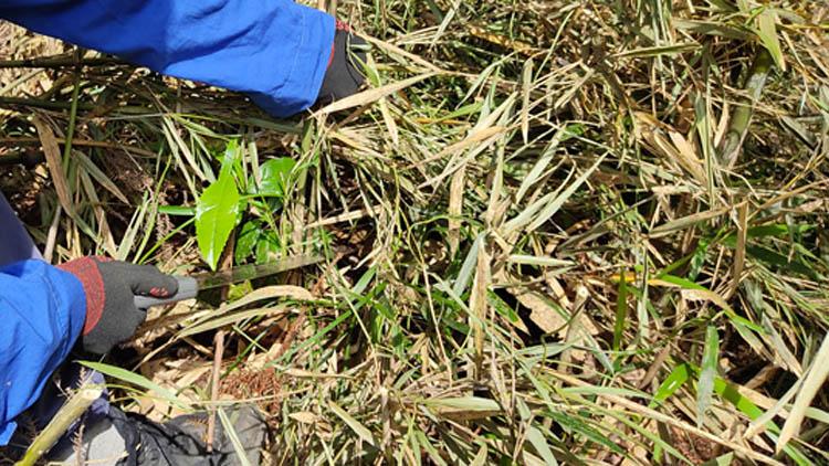 IMG 20210529 093055 - 整地の工程は3つだけ。「刈る」「除去」「土ならし」を 初心者が実践